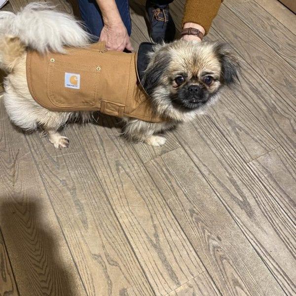 Diverse Carhartt Chore Coat – Hundejakke